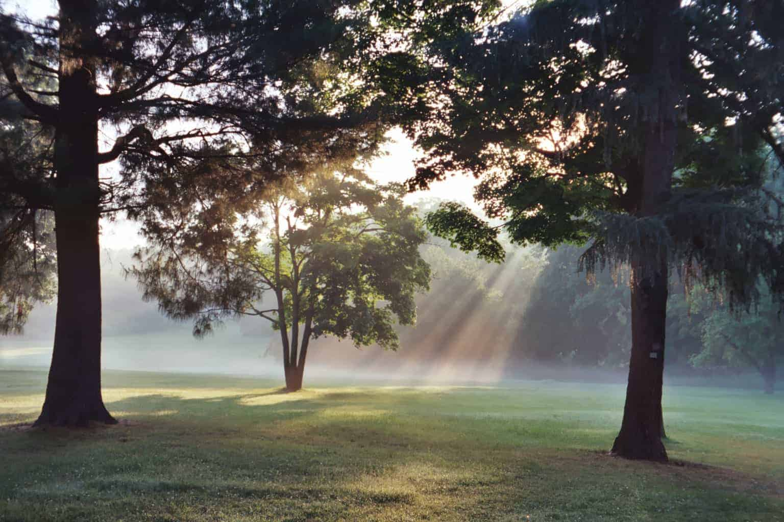 Sunlight-Thru-trees
