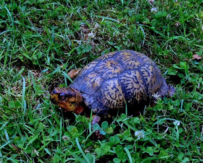 Turtle Edited